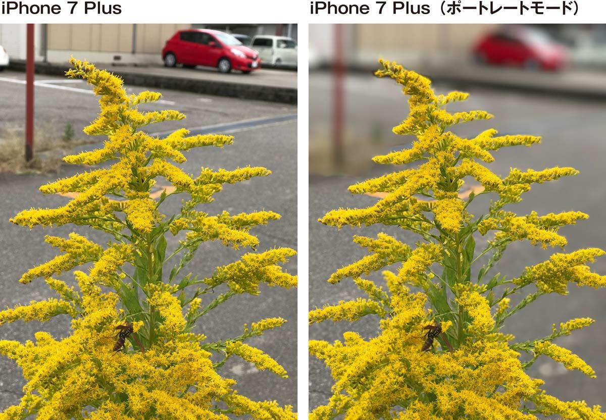 iPhone7 Plus ポートレートモード 作例3